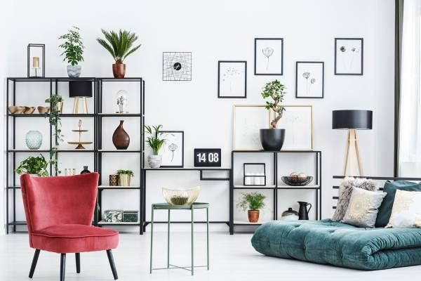 plants on the shelves