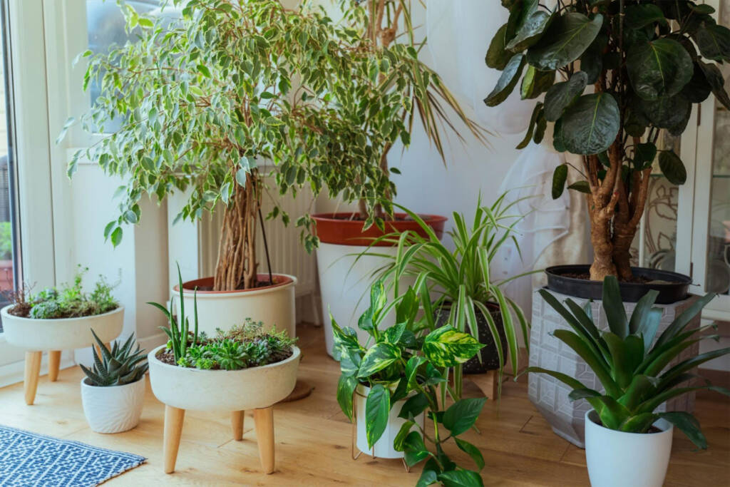 add houseplants